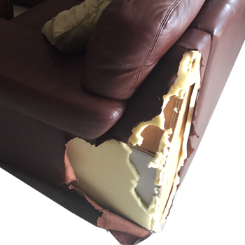 Fix chewed leather scratched pet damage - Recover and Reupholster Leather Sofa